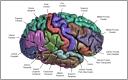 Figure appeared in Winkler et al. (2010), Neuroimage. [http://dx.doi.org/10.1016/j.neuroimage.2009.12.028]
