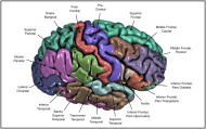 Figure appeared in Winkler et al. (2010), Neuroimage. [http://dx.doi.org/10.1016/j.neuroimage.2009.12.028]