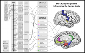 Appeared in Carless et al. (2011), Molecular Psychiatry. [http://dx.doi.org/10.1038/mp.2011.37]