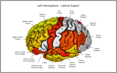 Appeared in Meda et al. (2012), Neuroimage. [http://dx.doi.org/10.1016/j.neuroimage.2011.12.076]