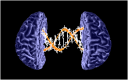 """Appeared in the lecture Winkler AM, """"Genetic influences on brain structure"""", OHBM-2010, Barcelona."""