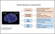 Appeared in Karlsgodt et al. (2011), Behavioral Brain Research. [http://dx.doi.org/10.1016/j.bbr.2011.08.016]